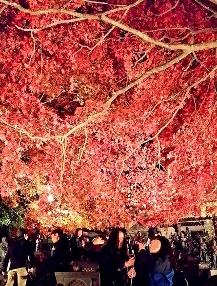 息をのむほど美しい紅葉シーズンの景観