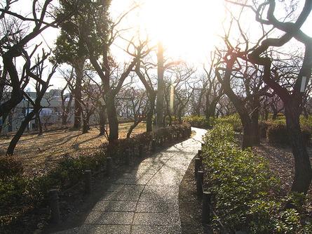 約650本の梅林が圧巻の「羽根木公園」