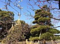 梅も桜も楽しめる「代々木公園」