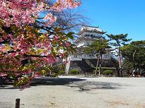 小田原に春がやってきた!