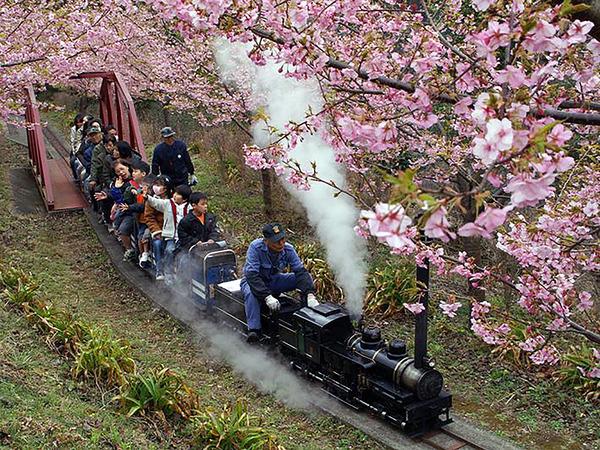 富士山や相模湾を一望できる町の「展望台」にある公園の画像