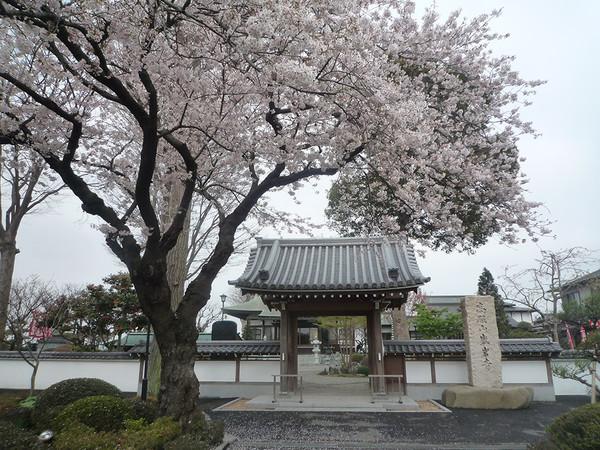 毎年恒例!盛岩寺の花まつり・歌まつりの画像