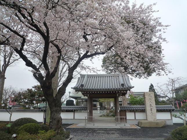 毎年恒例!盛岩寺の花まつり・歌まつり