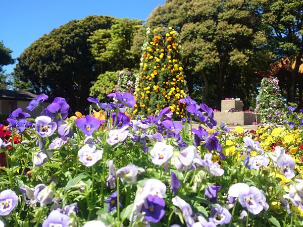 江の島で春を体感するイベント開催!の画像