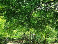 癒やしの森を満喫!広大な県立公園