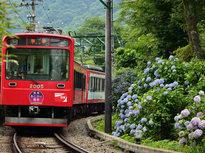 あじさい電車、心を和ませる旅