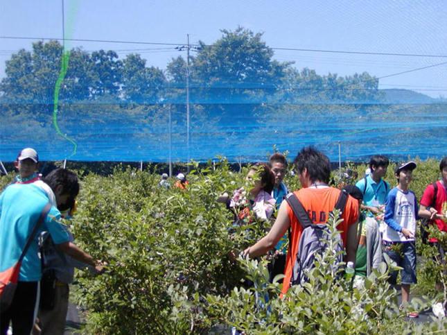 摘みたてを味わおう!ブルーベリー収穫体験