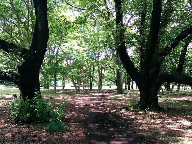 世田谷を代表する公園「砧公園」へ行ってみよう!