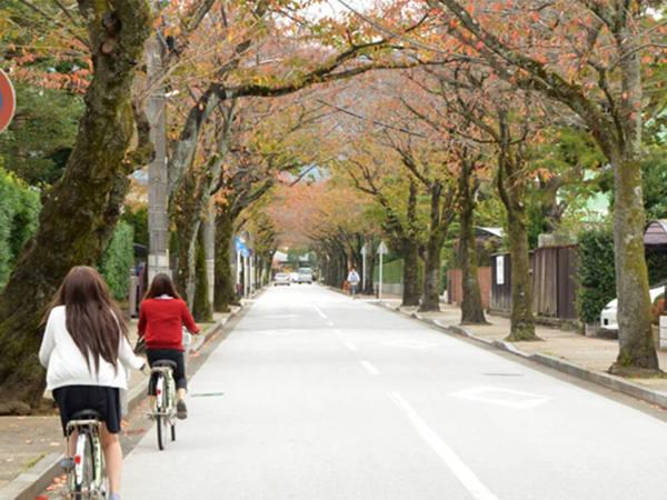 小田原散策はらくらく快適なレンタサイクルでの画像