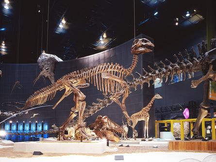 地球を感じられる博物館で学ぼう