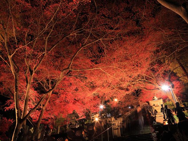 夜景×紅葉ライトアップ=絶景