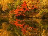 湖畔でゆっくりお散歩! 隠れた紅葉スポット