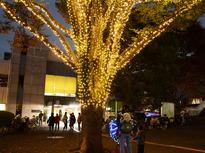 今年も狛江に温かみのあるイルミネーションが灯ります