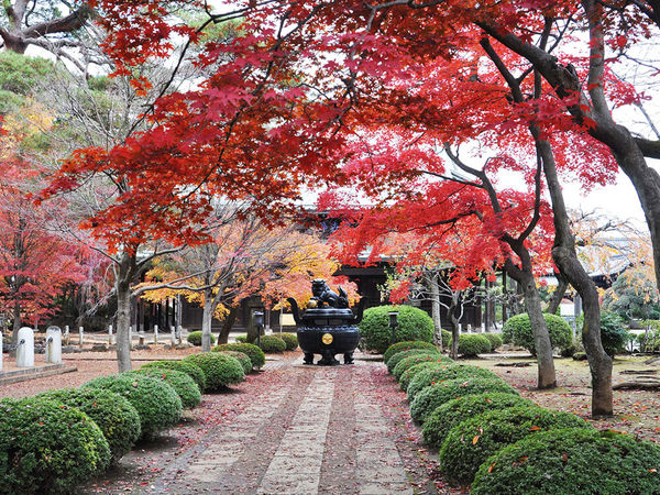 秋の豪徳寺をのんびり散策の画像