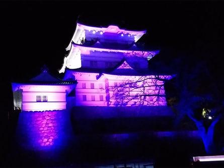 小田原城さくらイルミネーション