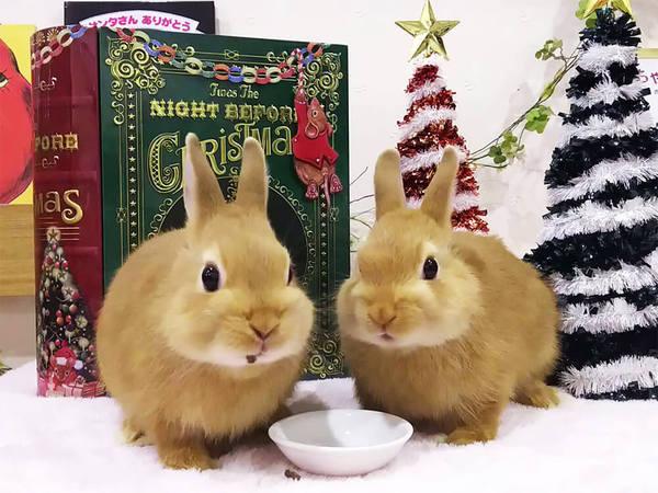 もふもふのウサギと触れ合えるカフェの画像