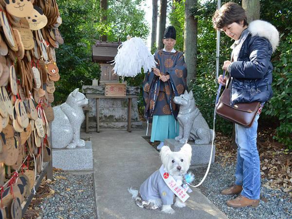 ペットと一緒に祈願できる神社