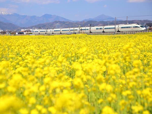 春の訪れを告げる菜の花畑