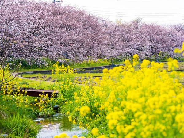春の小川でのんびりお花見