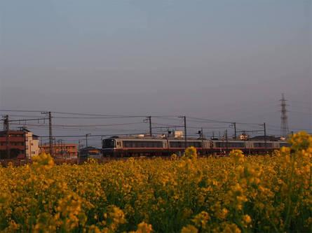 小田急線とお花畑