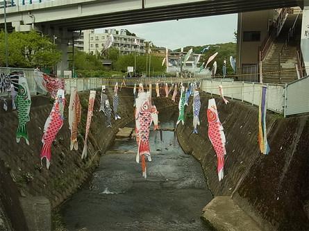 こいのぼりの泳ぐ五反田川
