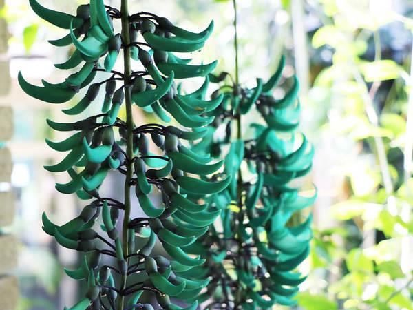 ヒスイのような熱帯の花の画像