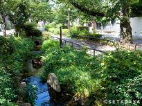 緑と花のきれいな散歩道