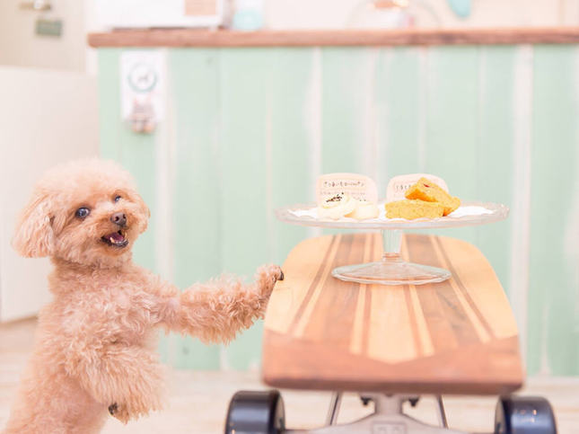 かわいいグッズを選んで、愛犬と毎日楽しい生活を!