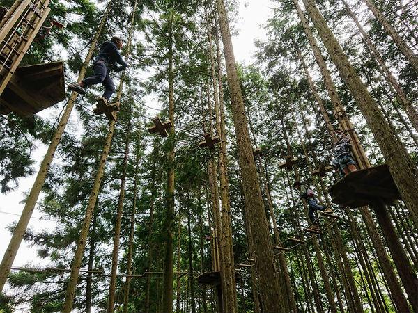 ターザン気分になって、森の中を飛び回ろう!の画像