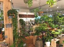 観葉植物がたくさん有ります