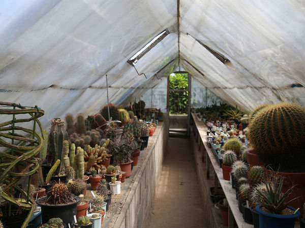 多肉植物のマニアからも一目置かれる多肉植物の農園の画像