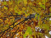 目に飛び込む鮮やかな紅葉の景色