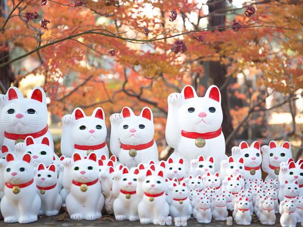 「猫」たちも喜ぶ紅葉
