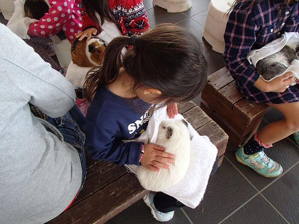 かわいい動物たちと触れあおう!