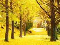初冬を彩る森林セラピーと正月飾りづくり体験!