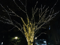 毎年恒例 狛江市役所のイルミネーション