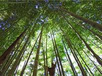 春の森林セラピーと、癒しのクリスタルハープ体験