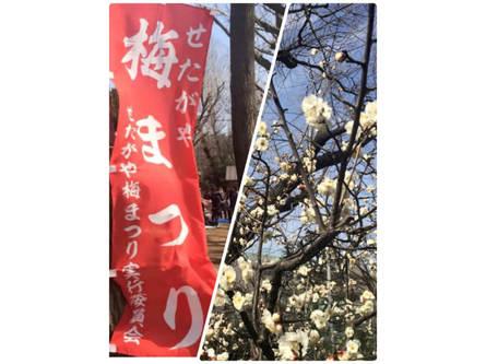 梅は咲いたか?!桜はまだかいな?!