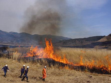 箱根の風物詩、仙石原の野焼き