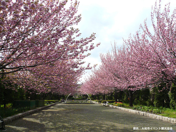 「さくらの散歩道」でのんびり春を満喫