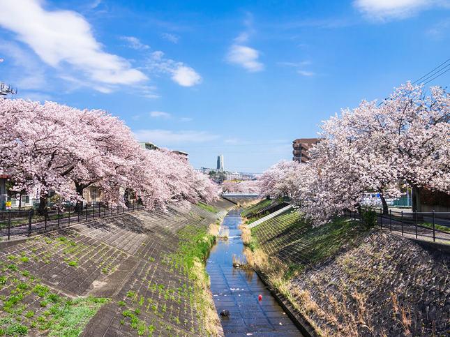 乞田川の両岸で春色を楽しもう!