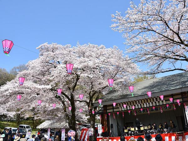 桜トンネルが圧巻!あつぎ飯山桜まつりの画像