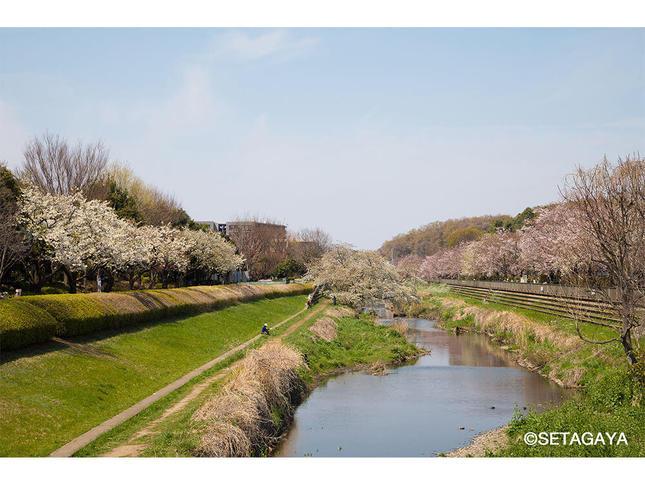 次々と花開く春の彩りを楽しめる「野川緑道」
