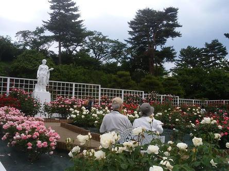 生田緑地「ばら苑」開苑