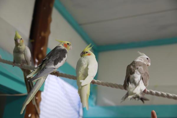 かわいい小鳥たちと触れ合える!