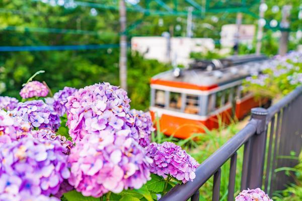 あじさい名所が点在! 箱根の魅力を楽しもうの画像