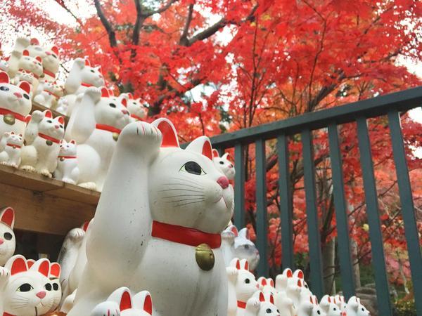 招き猫のお寺で秋を感じよう!