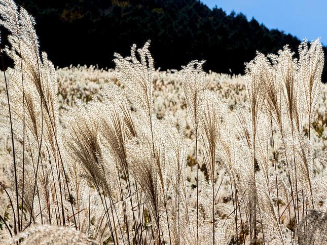 童心に返るススキ草原