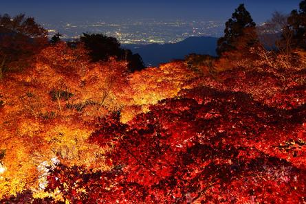 大山の紅葉ライトアップに行ってみよう!