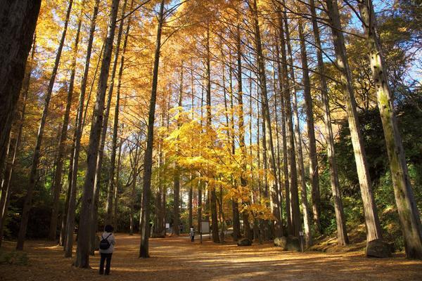 登山気分で紅葉狩りが楽しめる「生田緑地」